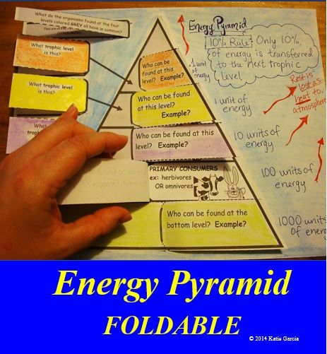 Energy Pyramid FOLDABLE that covers the different levels in a pyramid (ex: producers/autotrophs, primary,secondary,tertiary,quaternary consumers, & trophic levels)