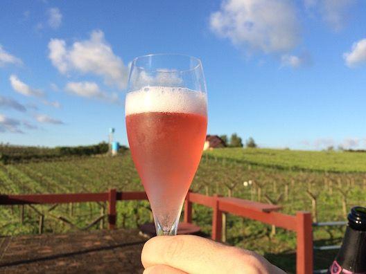 5 vinícolas na Serra Gaúcha #serragaucha #bentogoncalves #pintobandeira #riograndedosul #brasil #vinicola #vinho #enoturismo