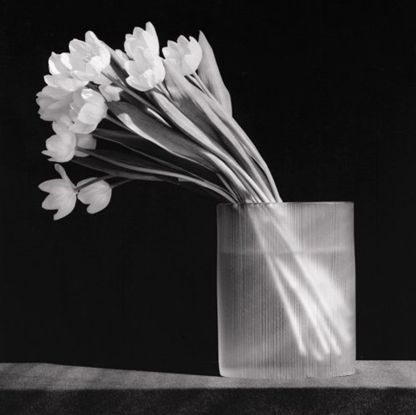 Robert Mapplethorpe: Tulips, 1986