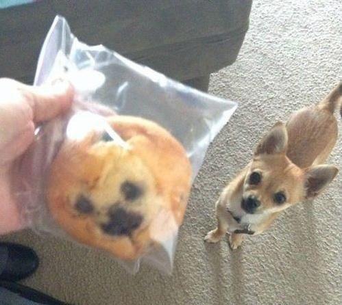 Deze muffin lijkt op mijn hond