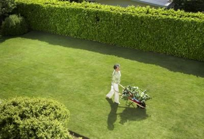 Gorgeous lawn and privet hedge.
