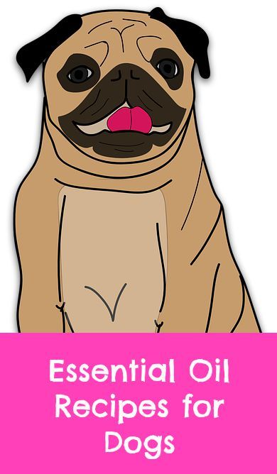 Essential oil recipes for dogs. In our house we use essential oils everyday. If needed, we also use them on our dog to maintain good ear health. He's 14 years old and very prone to outer ear infections. A simple recipe works for him to keep that nasty yeast away.