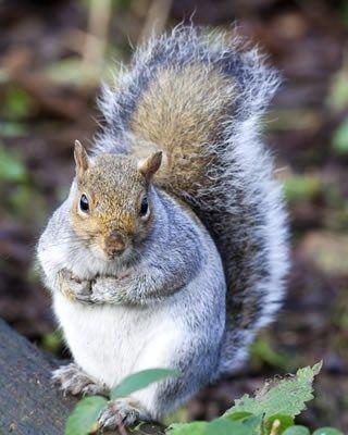 Squirrel photo reference Squirrel, Photo reference, Animals