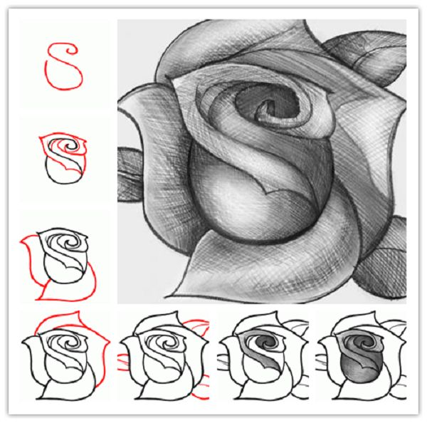 How to Draw a Rose