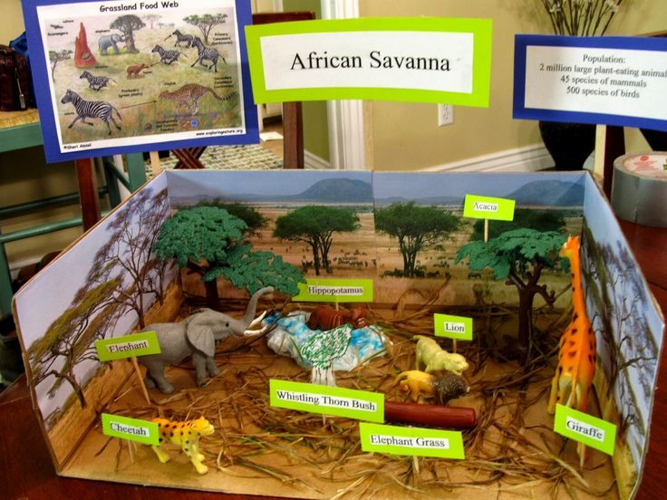 73 Best Dioramas Images On Pinterest School Projects Crafts For