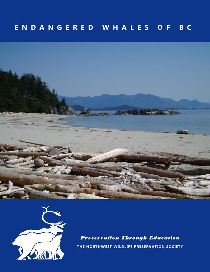 Learn more about the endangered whales of British Columbia