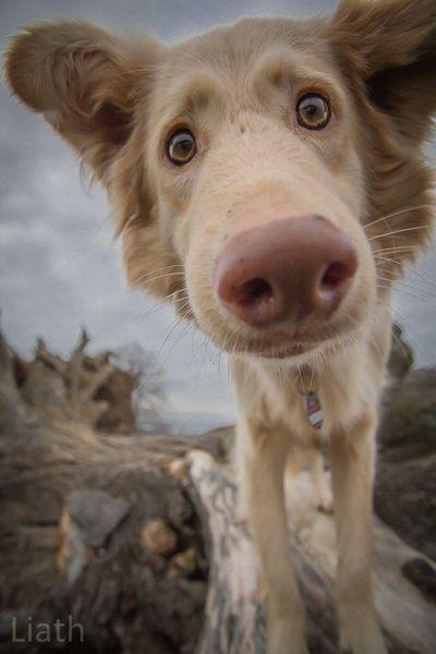 Liath Fotografie – Tiere