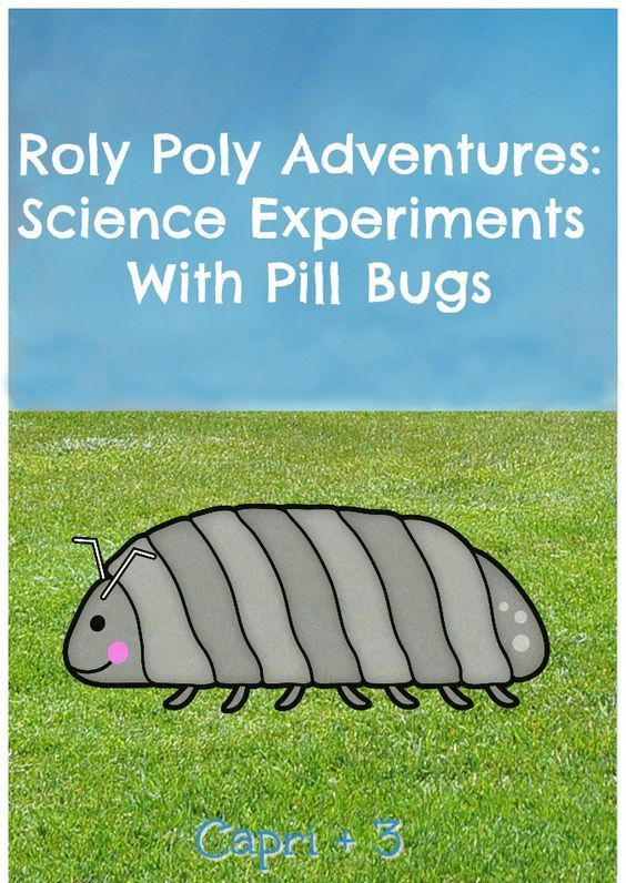 12 Best Pill Bugs Images On Pinterest Bugs Insects And Software Bug