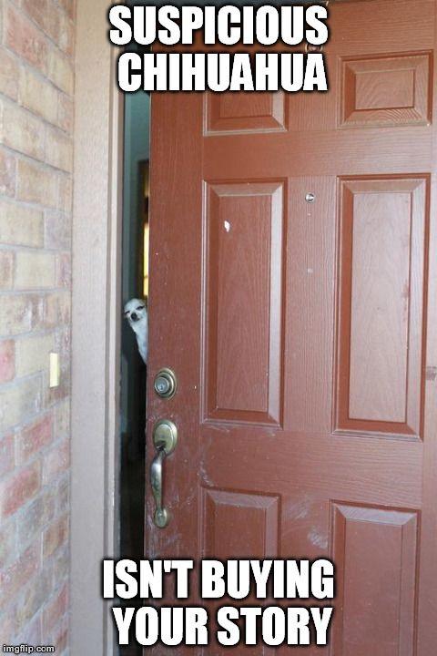 chihuahua meme | Pics Photos - Chihuahua By Forgottenusername Meme Center