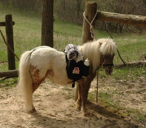 Best  Horse Tack For Sale Ideas On   Western Horse