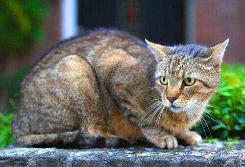 As diferentes personalidades de um gato