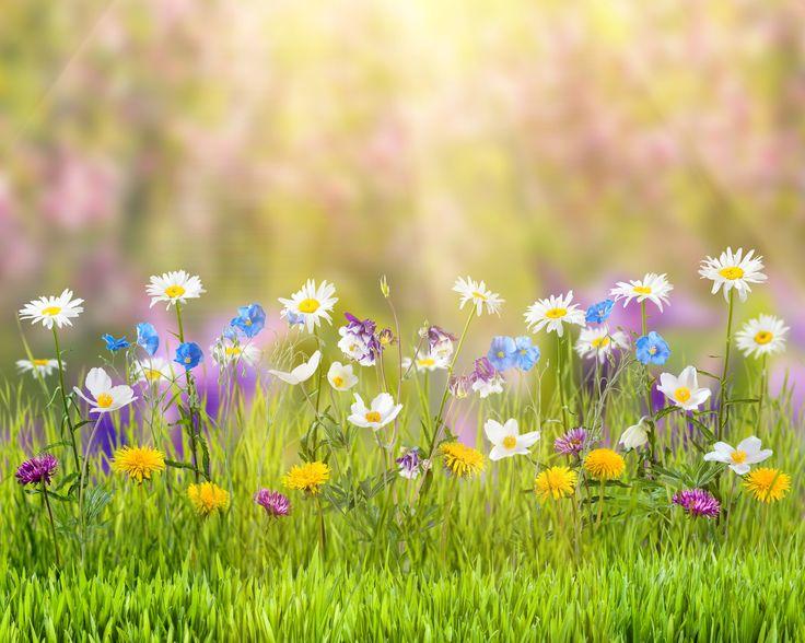Скачать обои лето, трава, цветы, природа, блики, ромашки, одуванчики, лучи солнца, боке, васильки, лютики, раздел цветы в разрешении 4500x3600