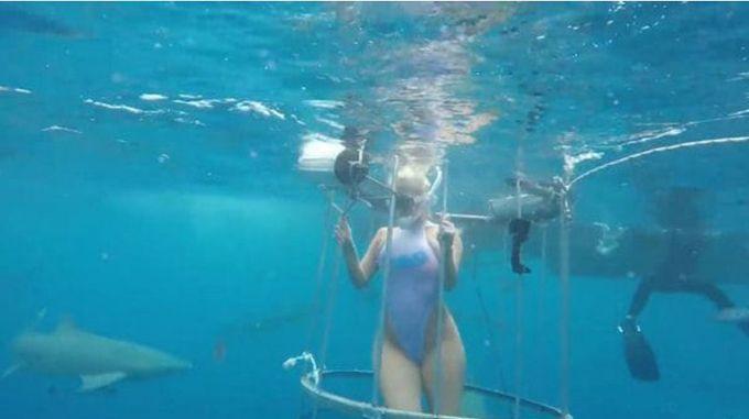 En video: ¡De terror! Actriz porno fue atacada por un tiburón