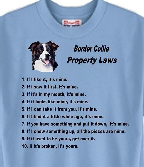 10036615c381 Poodle Property Laws Dog T Shirt Adopt Rescue Animal Cat Women Men # 77