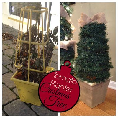 2 diy small potted christmas trees from patio tomato planter, christmas decorations, gardening, seasonal holiday decor