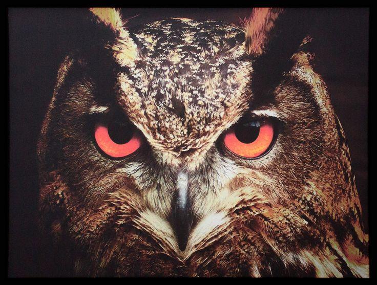 Quadro Tela Decorativa Emoldurada Coruja de Olhos Vermelhos 76x58cm - Decore Pronto