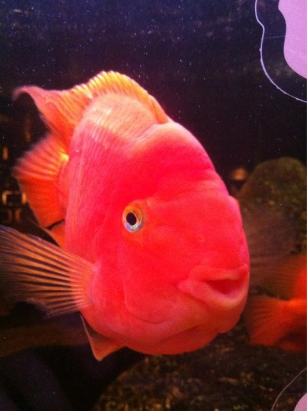 Pink fish makes me think of angie pinterest pink for One fish two fish red fish blue fish