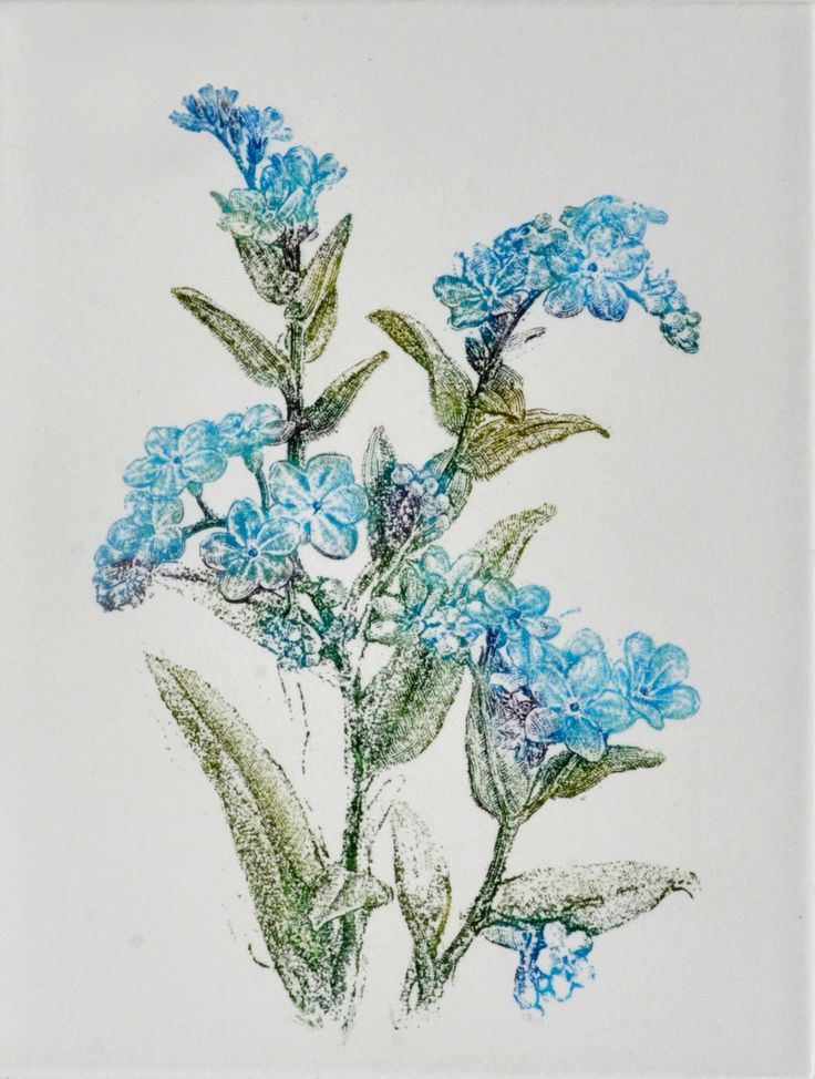 Myosotis ( forget-me-nots, scorpion grasses) -  handmade copper-plate etching & engravings print ideal home decor by AtelierPoltorak on Etsy