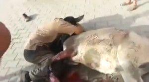 In Iraq è strage continua, centinaia di persone uccise ogni giorno per un'assurda guerra di religione, eppure c'è ancora qualcuno che si commuove e si dispera per la perdita di un asino. Nel video è visibile un uomo che piange istericamente dopo che il suo asino è morto a seguito di un incidente stradale, mentre […]
