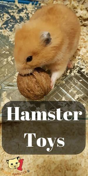 Spielzeug für Hamster ist überraschend einfach – aber schwer zu finden. Für mein…   – Animal Gifts