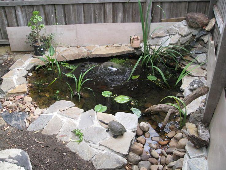 Turtle Pond Nicely Done Backyard Turtle Coy Pond Pinterest