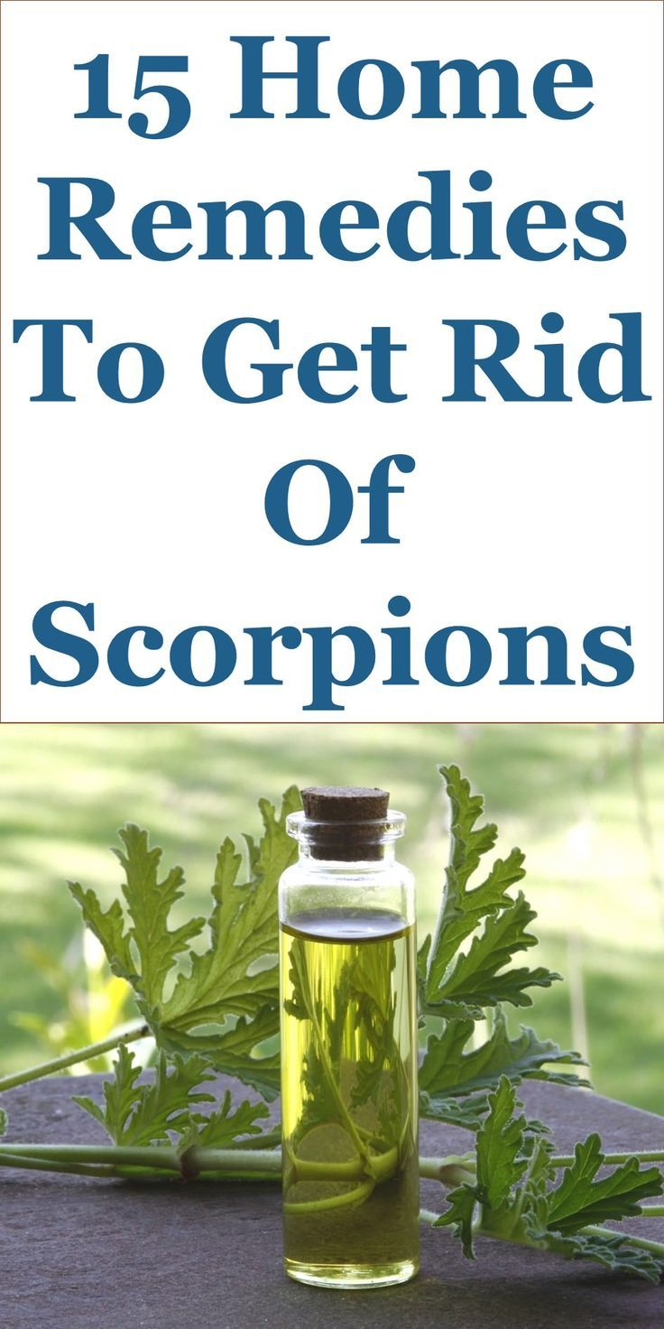 how to get rid of scorpions in your home