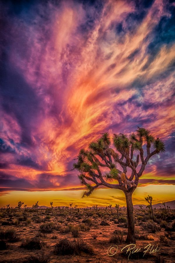 ~~Joshua Tree National Monument ~ Twentynine Palms, California by Rikk Flohr~~
