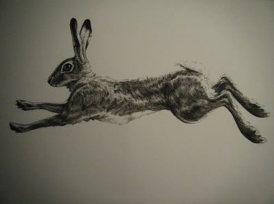 .running hare