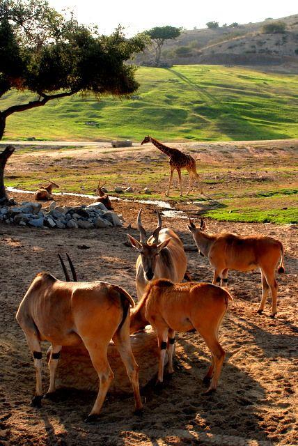 Wild animal park - San Diego, California http://www.stopsleepgo.com/vacation-rentals/san-diego/san-diego/california/united-states