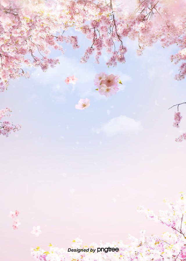 Flor De Cerejeira Ceu Nuvens Ceu Azul Fundo Fresco Blue Background Images Blue Sky Background Cherry Blossom Background