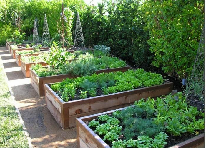 a row of raised beds - Raised Garden Bed Design Ideas