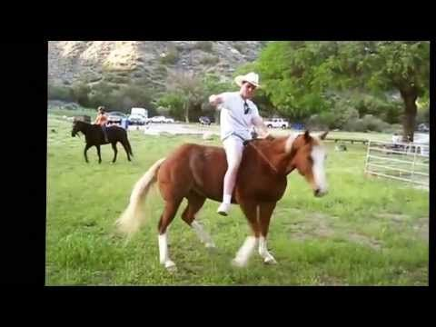 2013 Funniest Horse Video Contest Winners - YouTube