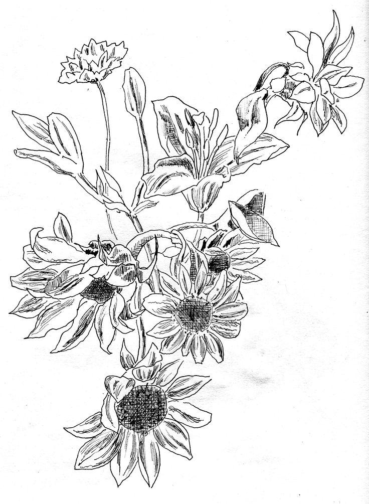 Contour Line Drawing Flowers : Best flower drawing images on pinterest daisies
