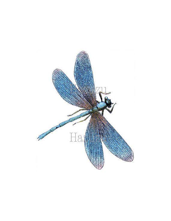 Blue Dragonfly Png Clip Art Iridescent Digital Stamp Instant Etsy Blue Dragonfly Dragonfly Wall Art Dragonfly