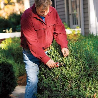 Shrub Pruning Dos and Don'tsMan Pruning, Kindra Clineff, Gardens Perfecto, Don T Gardens, Favourite Gardens, Dividers Plants, Outdoor Landscapes, Essential Survival, Shrubs