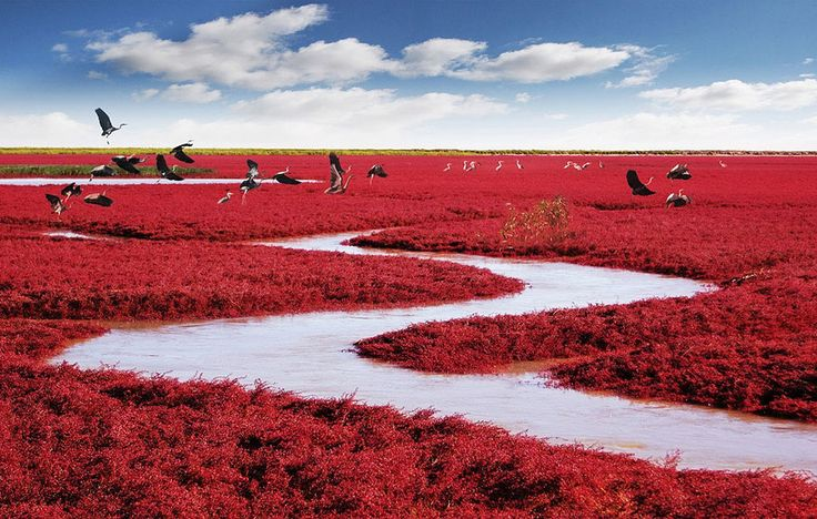 Incredible Red Beach in China