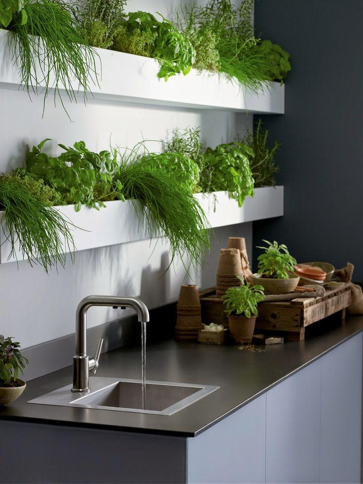 она призналась живая зелень на кухне фото показывал комбинации