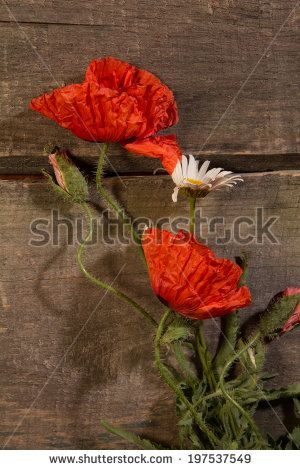 Red poppies and white daisy lying old boards