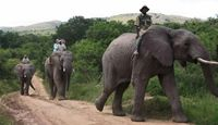 Elephant Back Safaris - near Addo National Park, South Africa  Elephant Safari Lodge is close to Addo National Park in the Eastern Cape of South Africa at the start of the Garden Route.