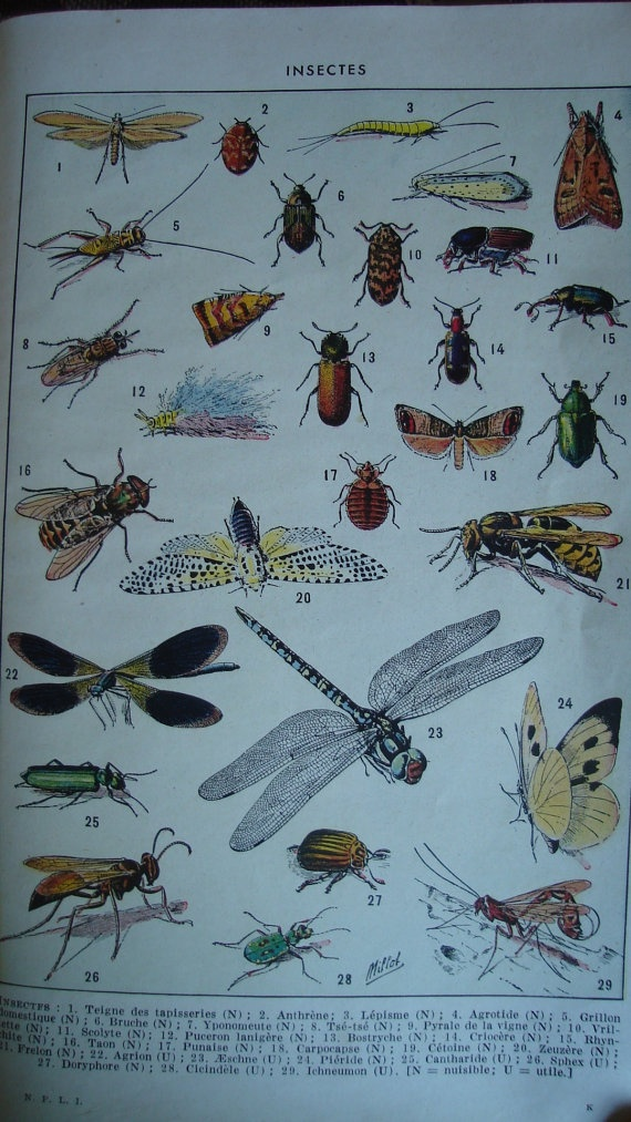 insects poster $6