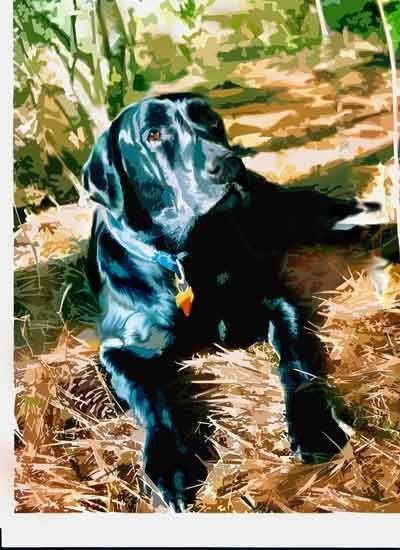 Custom Order Black Labrador Retriever Portrait and  by SonnyBuds