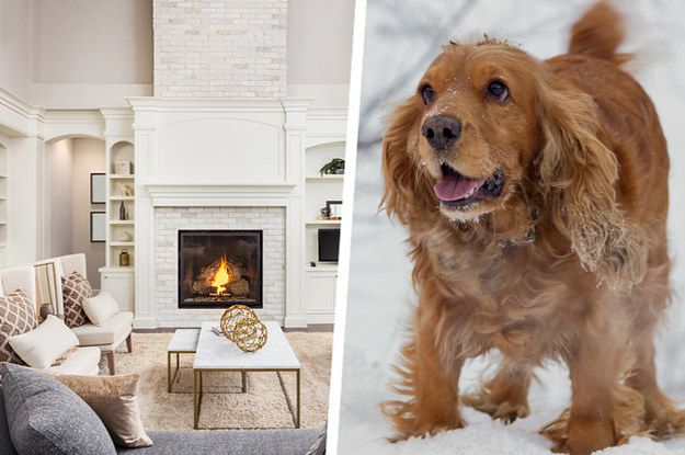 Build Your Dream House And We'll Reveal Which Dog Breed You Should Adopt>>You got: Cocker Spaniel