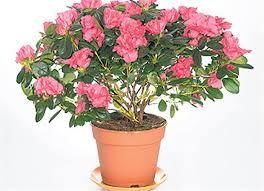 Flowers To Buy,  http://noworderflowersonline.jimdo.com/  Order Flowers,Order Flowers Online,Buy Flowers Online,Buy Flowers,Ordering Flowers,Where To Buy Flowers,Ordering Flowers Online