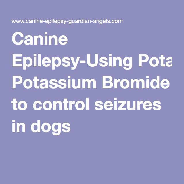Canine Epilepsy-Using Potassium Bromide to control seizures in dogs