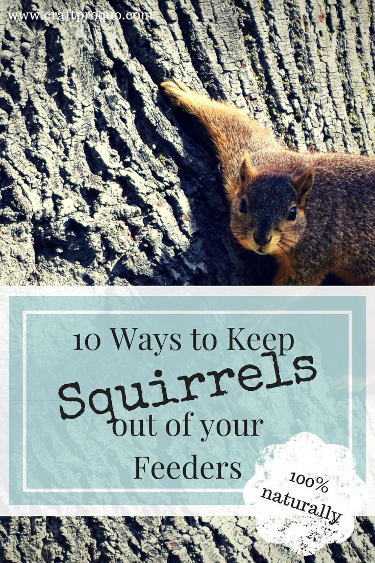 how to keep squirrels away from your house