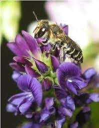 Bayer Pesticides Kill Bees | Food First/Institute for Food and Development Policy