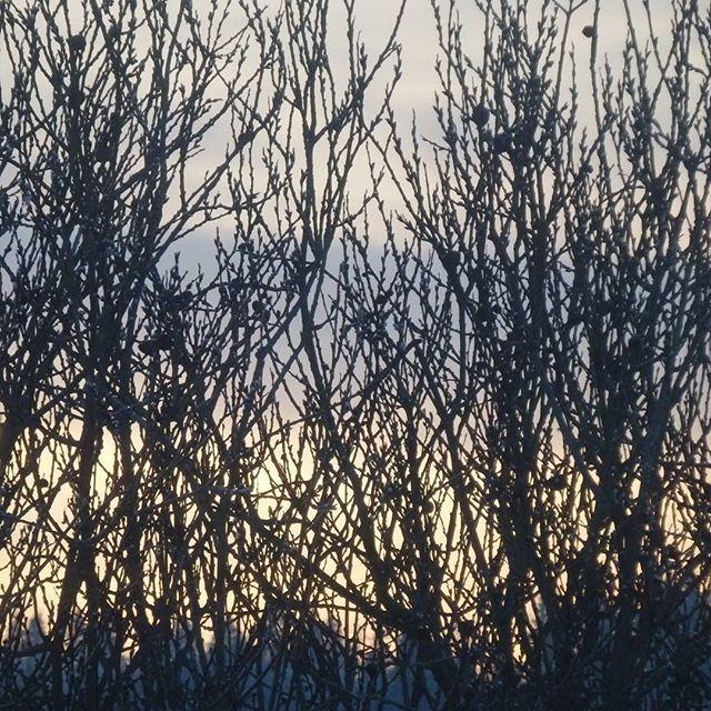 🌲🏠🌲🌲 #viewfrommywindow #nature #winter #window #sunset #закат #изокна #природа #зима