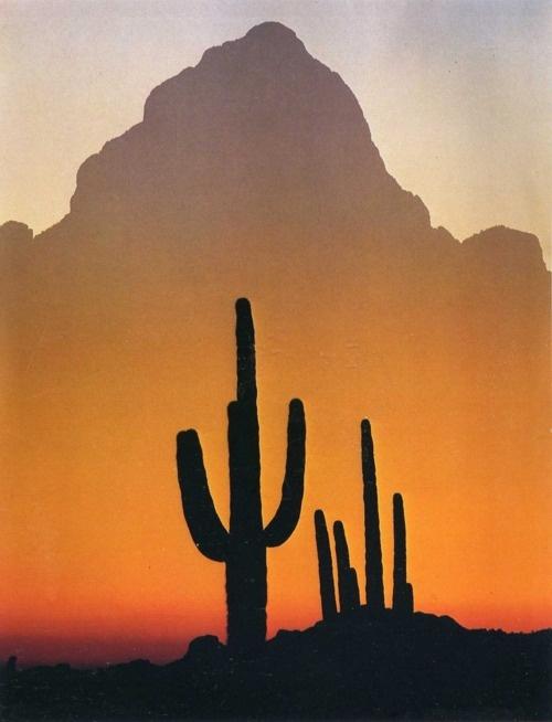 Desierto de Sonora. México.