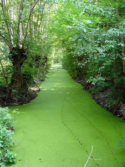Green Venice (Marais Poitevin) - Poitou Charentes, France. A good fun day out on the canals by boat on your holiday from our vacation rentals.