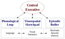 """Cognitive Psychology-- is the study of mental processes such as """"attention, language use, memory, perception, problem solving, creativity, and thinking.""""[1] Much of the work derived from cognitive psychology has been integrated into various other modern disciplines of psychological study, including educational psychology, social psychology, personality psychology, abnormal psychology, developmental psychology, and economics."""